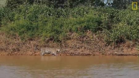 NatGeo_JaguarAttacksCrocodile