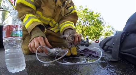 GoPro_Fireman+Kitten