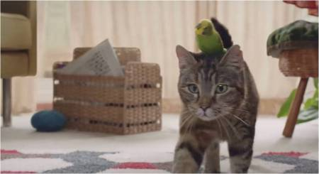 Freeview_Cat-and-Budgie