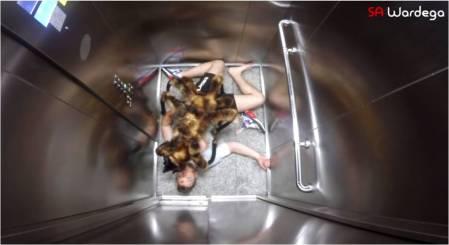SA Wardega_MutantGiantSpider-Dog