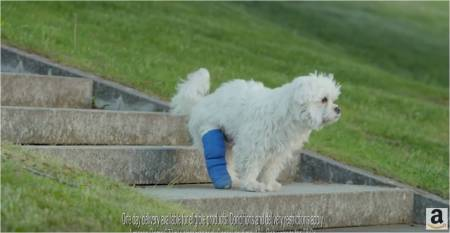 Amazon Prime_A dog with a bad leg