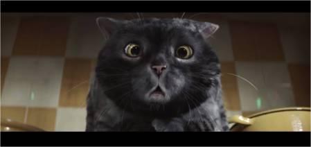 Sainsbury's_Mog the Cat