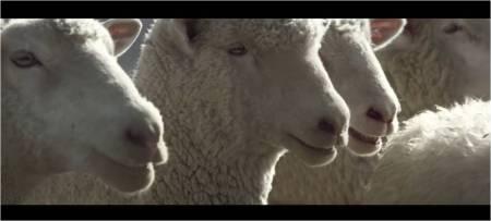Honda Ridgeline_Sheep_SuperBowl