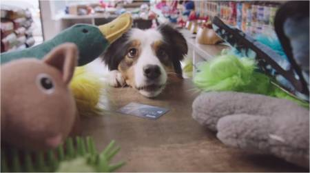 Interac_#PetsWithCredit_dogumentary